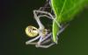 Arachnides2